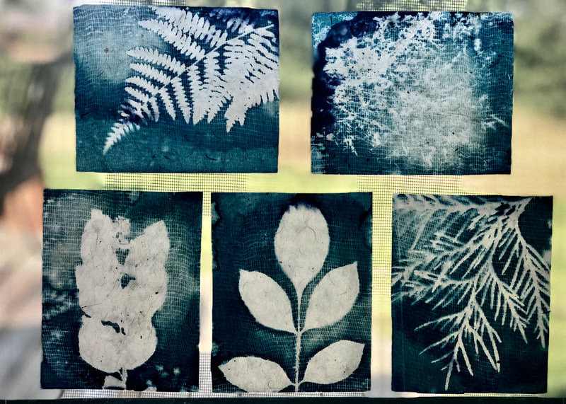 cyanotypes on handmade Japanese gampi paper