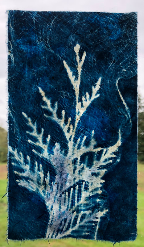 cedar cyanotype on handmade Japanese gampi paper