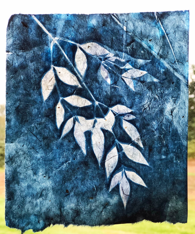 heavenly bamboo cyanotype on handmade Japanese gampi paper
