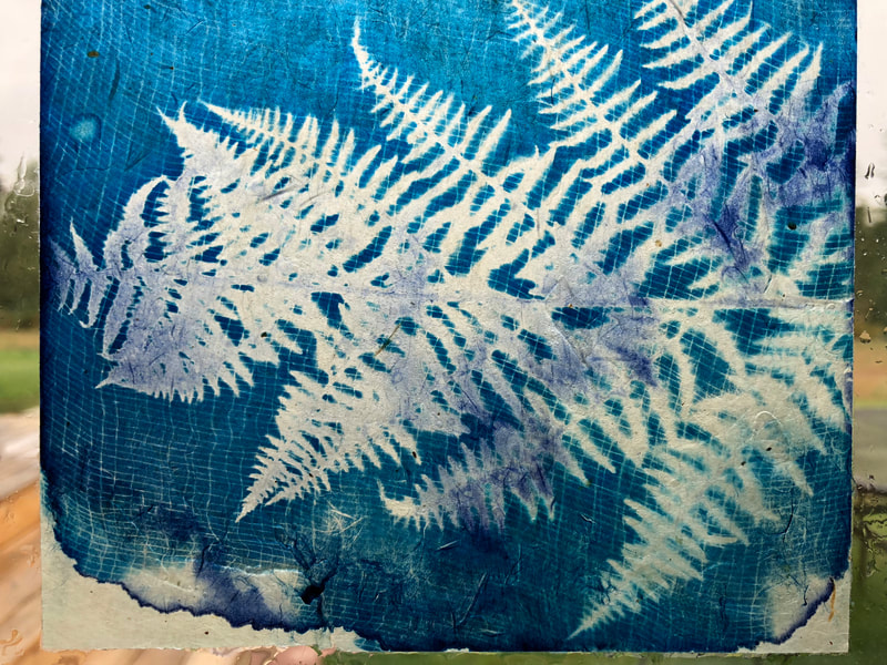 Cyanotype of woodland fern on handmade Japanese gampi paper