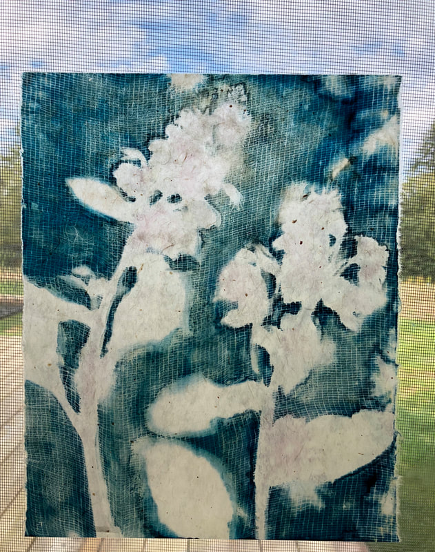 borage cyanotype on handmade Japanese gampi paper