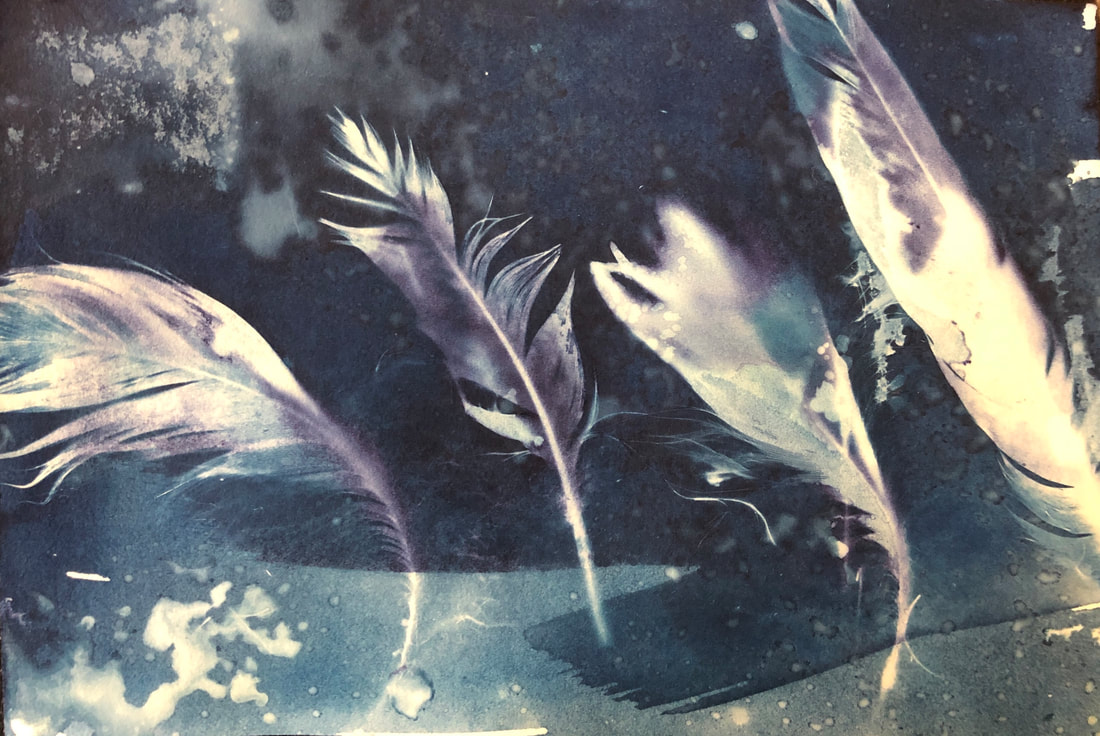 Cyanotype, Altered Images Experimental Photography