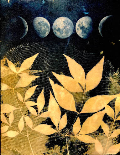 Moon contact print nandina cyanotype
