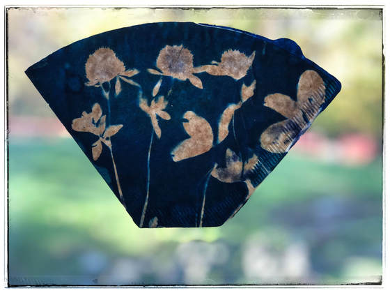 Coffee Filter Cyanotype Clover